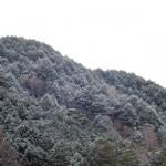 初雪&初冠雪