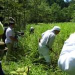 伝統工芸の森の草刈と橋作り