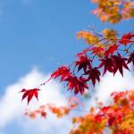 秋らしく色づきだした楓と檀