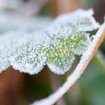 霜が降りる
