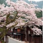 桜満開な妻籠宿