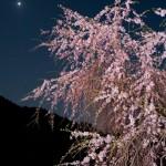 桜と星空と