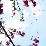 木だけじゃない春の花