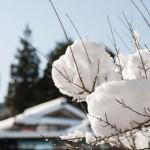 色々なものの上に雪が