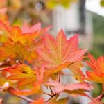 紅葉と紅葉