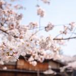 南木曽町は花盛り!