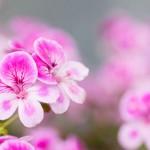 近所に咲いてた花色々