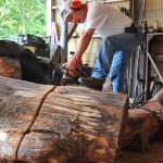 ケヤキの原木を製材中