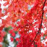 秋の京都・嵐山