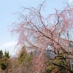 木地師の里もやっとこ春らしくなってきました♪