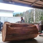栂の巨木の製材