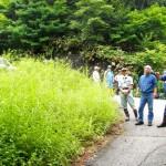 伝統工芸の森の草刈