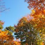 嫁日記:秋の紅葉狩り