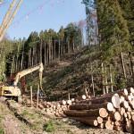 当店向かいの山の木を伐採中