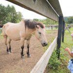 開田高原の木曽馬の里へ行く